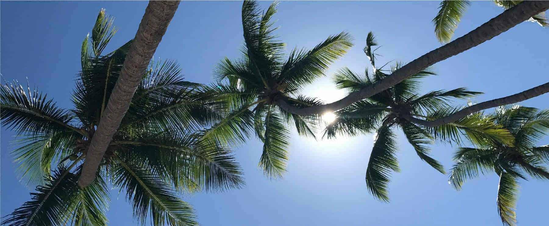 Imagen de slider del home page del website de Caribbean Soaps con texto de Bienvenido al Caribe y con imagen de palmas en la playa de Rincón Hecho en Puerto Rico
