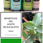 aceite esencial eucalipto Congestion nasal y dolores musculares